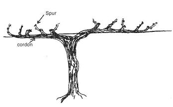 Spur Pruning